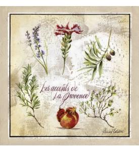 Carte postale les accents de Provence fleur