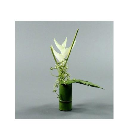 Compo Bambou Héliconia