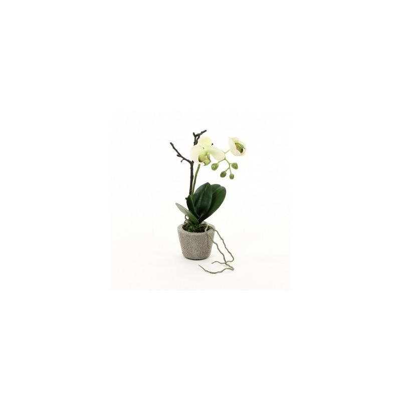 Compo orchidée phalaenopsis blanc