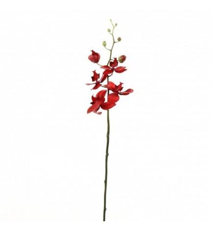 tige orchidée phalaenopsis rouge