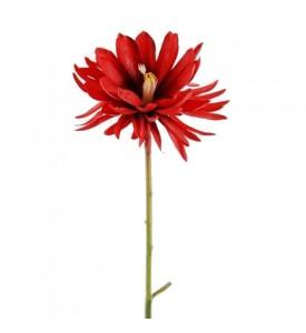 fleur lotus rouge