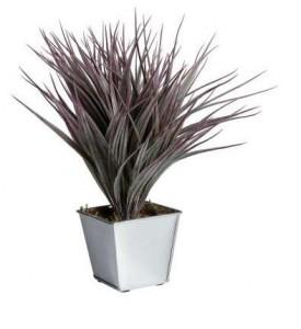Plante Vanille