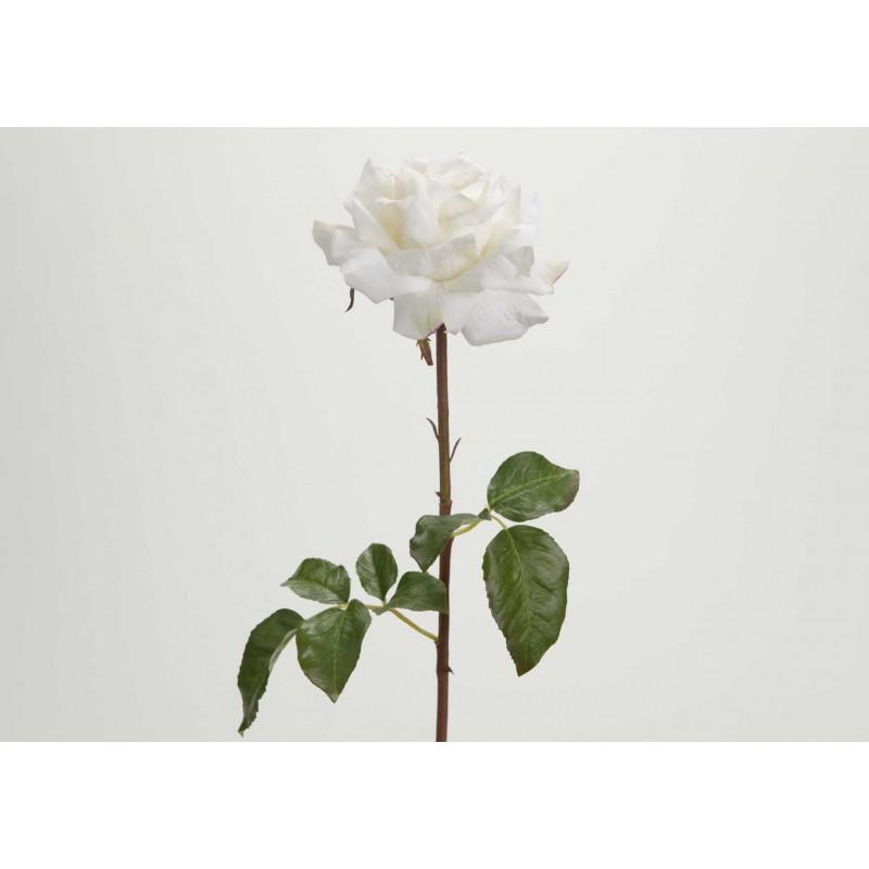 Tige Rose Pristine