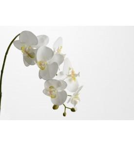 Tige Orchidée Doris