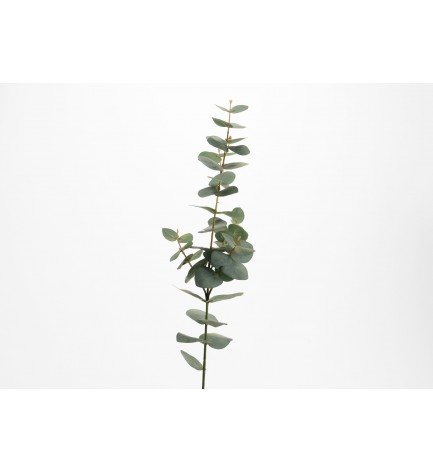 Tige Eucalyptus Nicholii