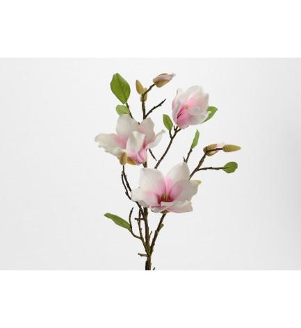 Tige Magnolia Liliflora