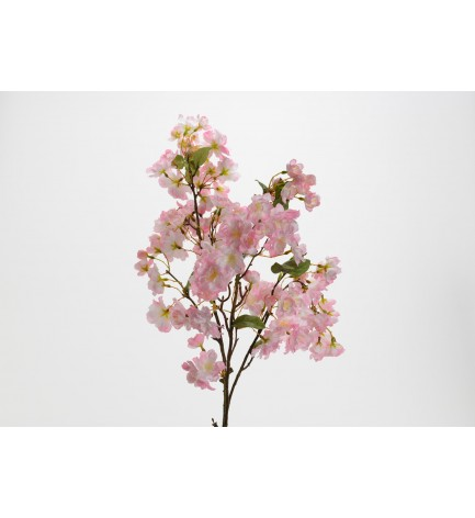 Tige Cerisier Kyoto
